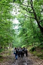 Élèves dans la forêt de Fontainebleau.