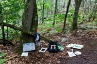 Sacs dans la forêt