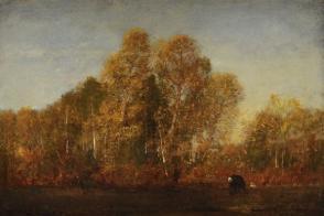 Lisière d'un bois coupé, forêt de Compiègne ou Clairière près de Pierrefonds dans la forêt de Compiègne.