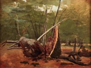 Détail d'un tronc d'arbre en forêt, 1822.