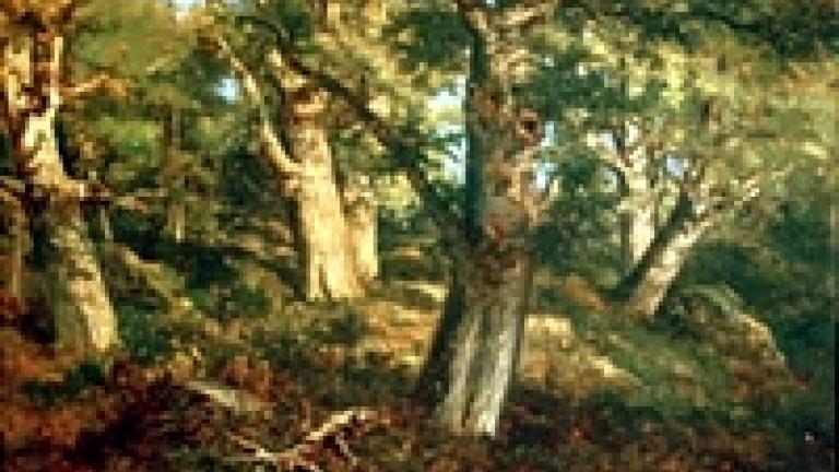 Sous-bois en forêt de Fontainebleau.